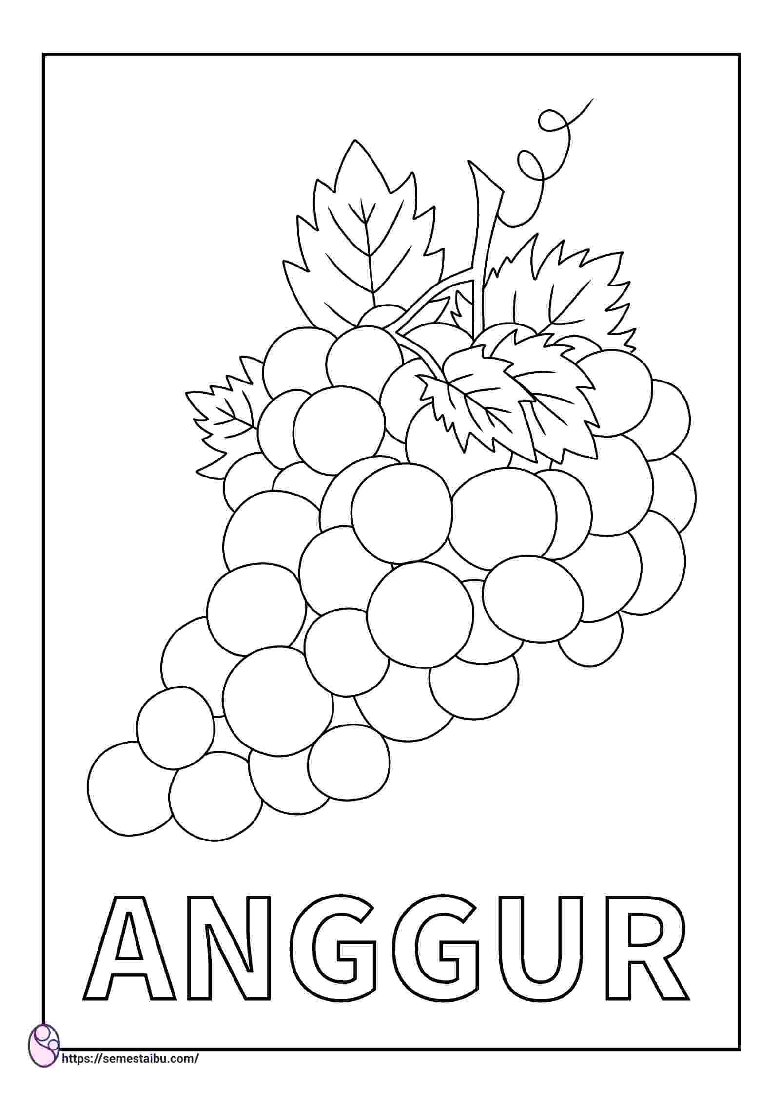 gambar mewarnai buah - anggur