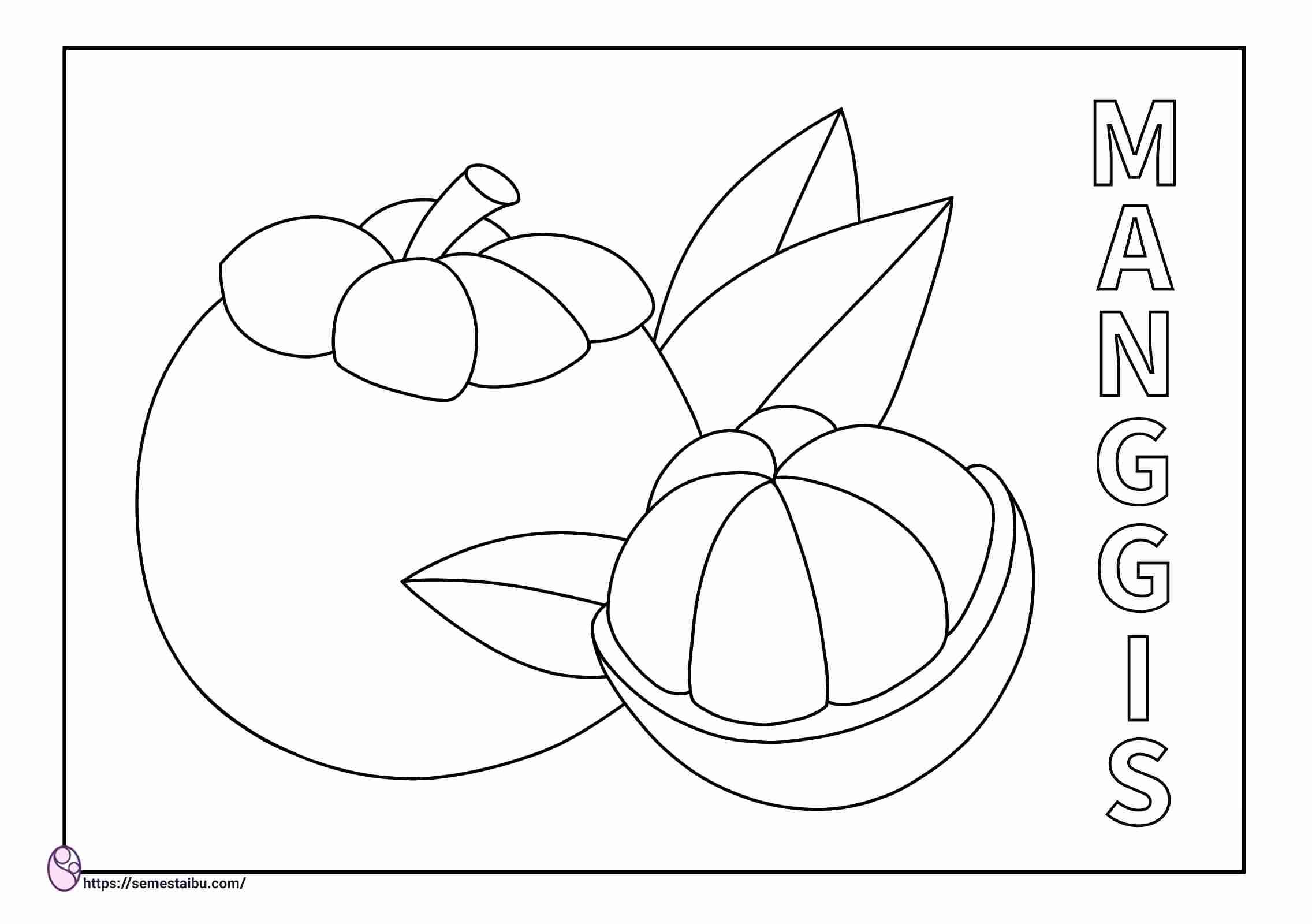 gambar mewarnai buah manggis